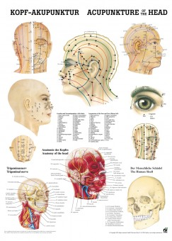 Kopfakupunktur