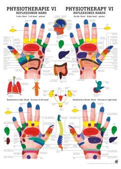 Reflexzonen Hand Poster 24cm x 34cm