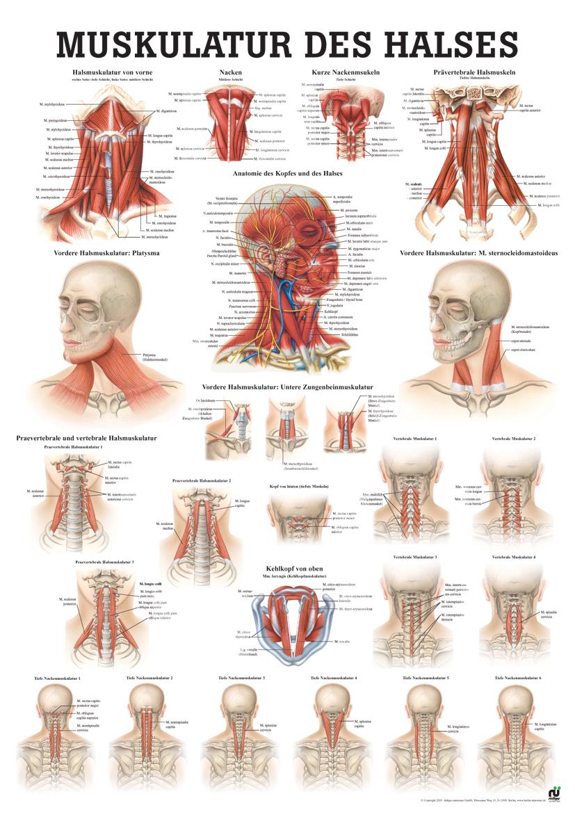 Fantastisch Anatomie Und Yoga Bilder - Menschliche Anatomie Bilder ...