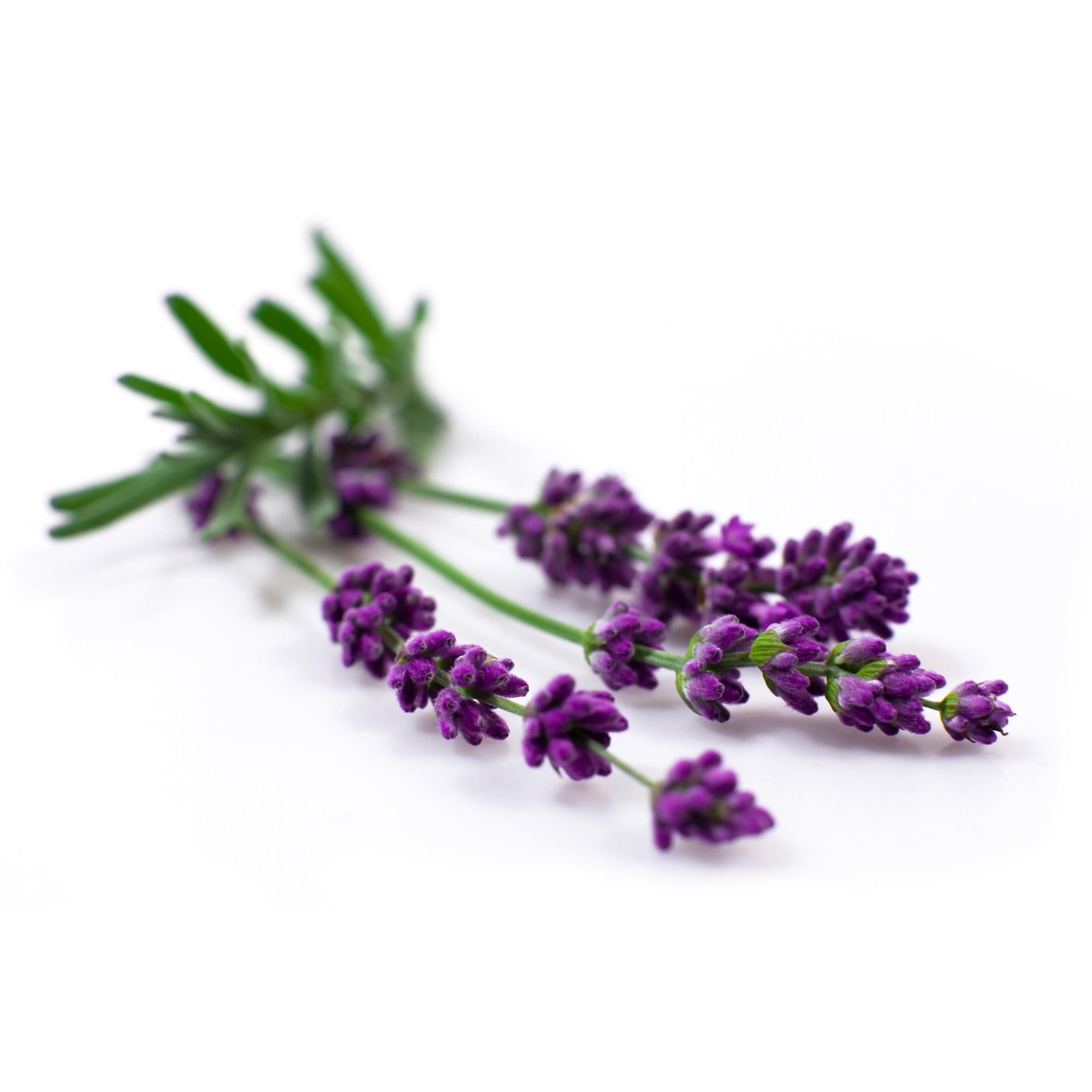 Bio Yogamatten-Reiniger - fresh lavender - 50 ml